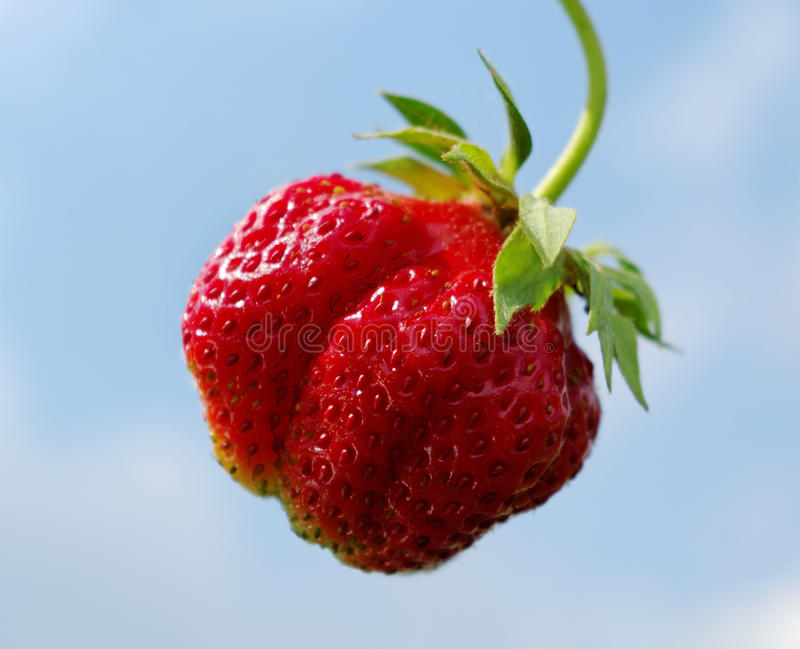 Download Single Strawberry. Stock Photos - Image: 19969943