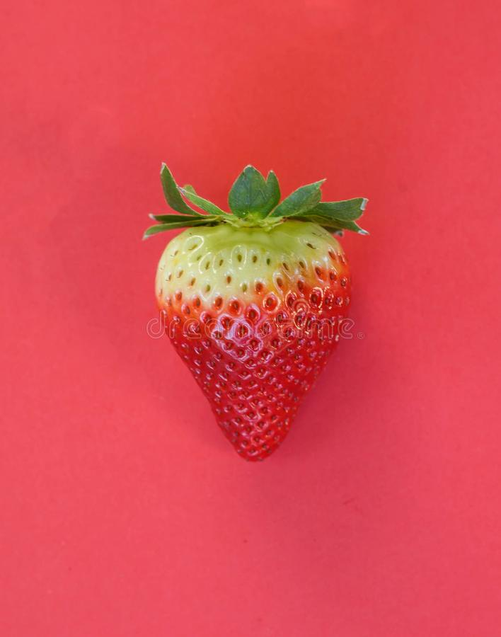 Single strawberry on red background. Single strawberry close up on red background stock images