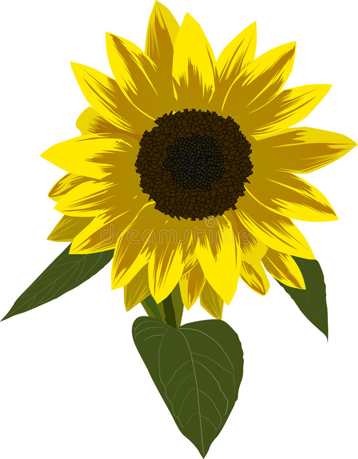 Single sunflower illustration royalty free illustration