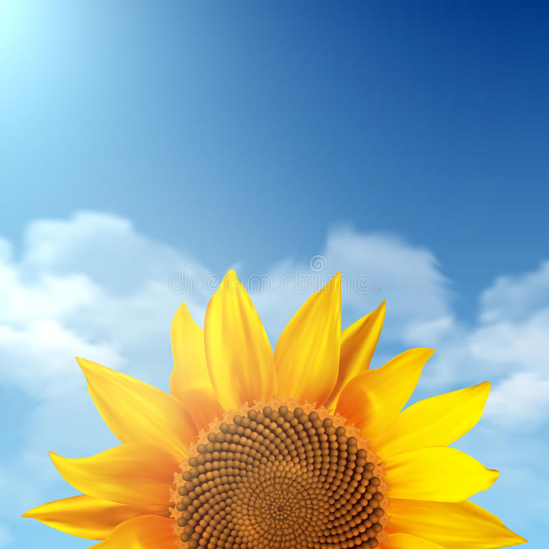 Single sunflower with a sky as a background royalty free illustration