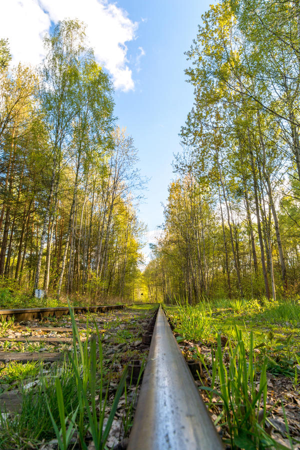 A single track in the forest stock photo