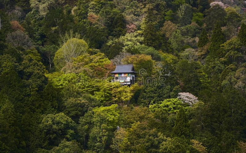 A single traditional japanese cottage among fresh green foliage of trees and bushes in spring time stock photos