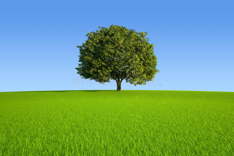 Single Tree. On meadow hill stock illustration
