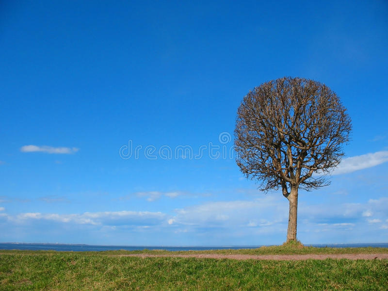 Download Single tREE stock image. Image of tree, background, nature - 22682179