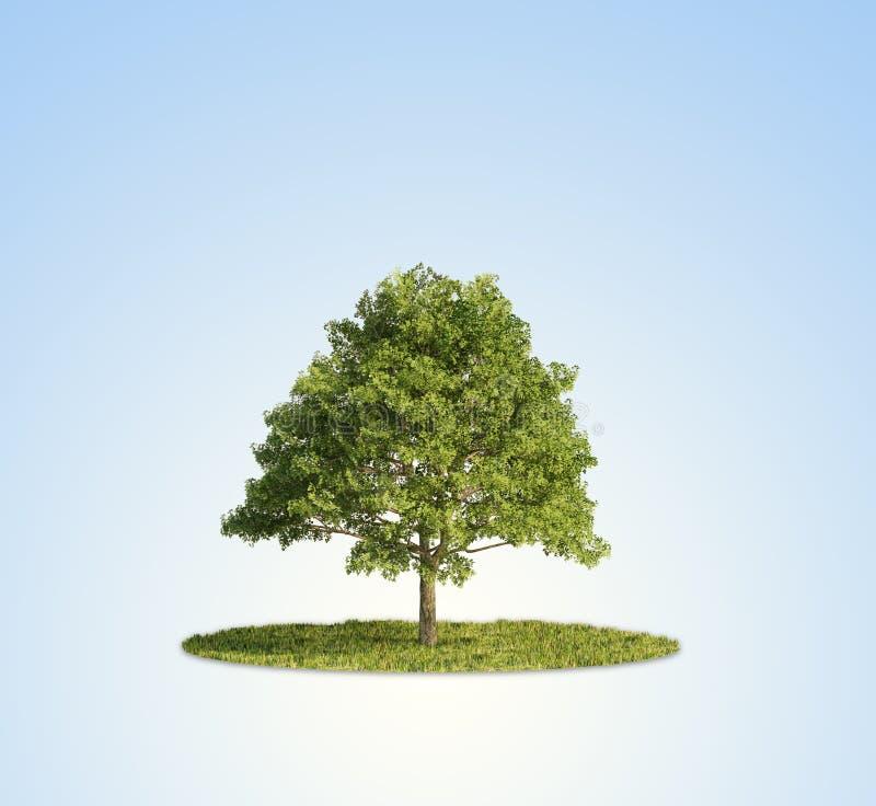 Download Single tree stock image. Image of environmental, magic - 24942173