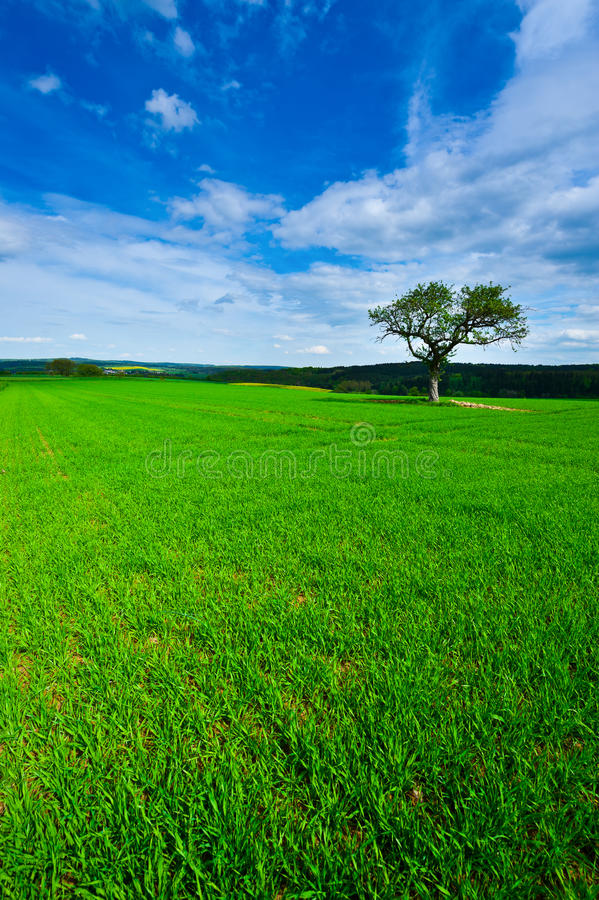 Download Single Tree stock image. Image of landscape, land, german - 25412619