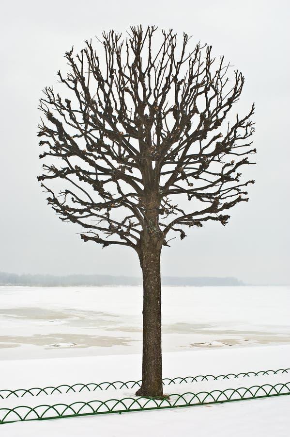 Download Single tree stock image. Image of fence, pattern, margin - 26585089