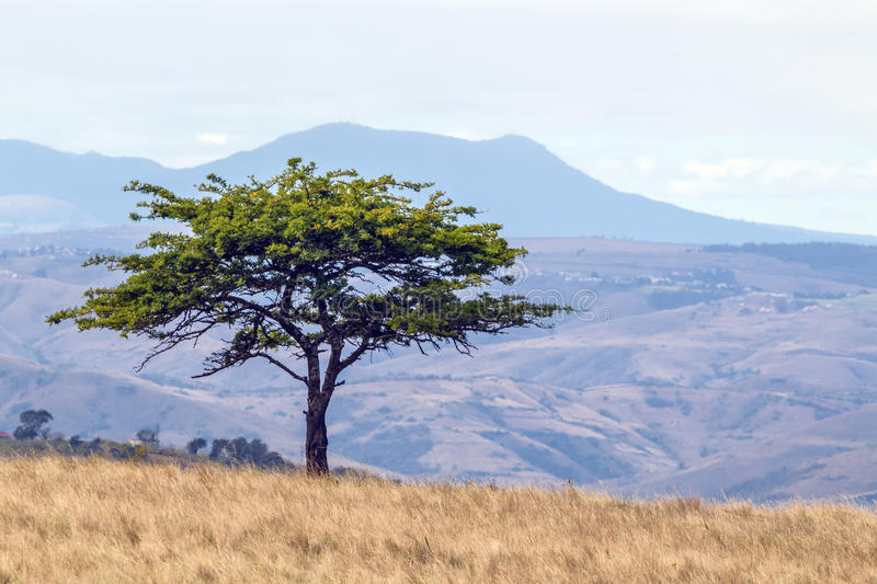 Single Tree Against Hills Valleys and Blue Sloudy sky stock photo