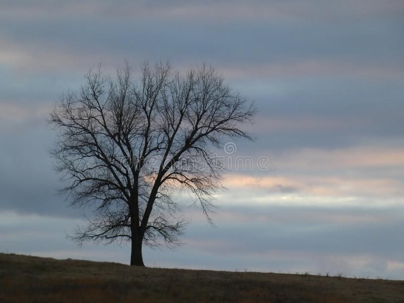 Single Tree with Bare Branches Silhouette on Hilltop Against Cloudy Watercolor Dreamy Sky royalty free stock photography