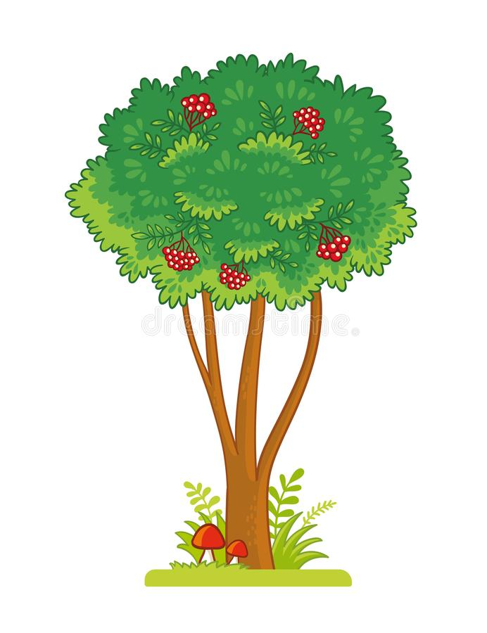Single tree with berries on a white background. Vector illustration with rowan vector illustration
