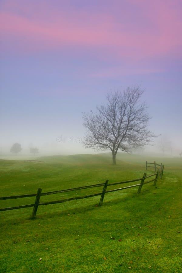 Free Single Tree Caught In The Winter Fog Stock Photos - 12715593
