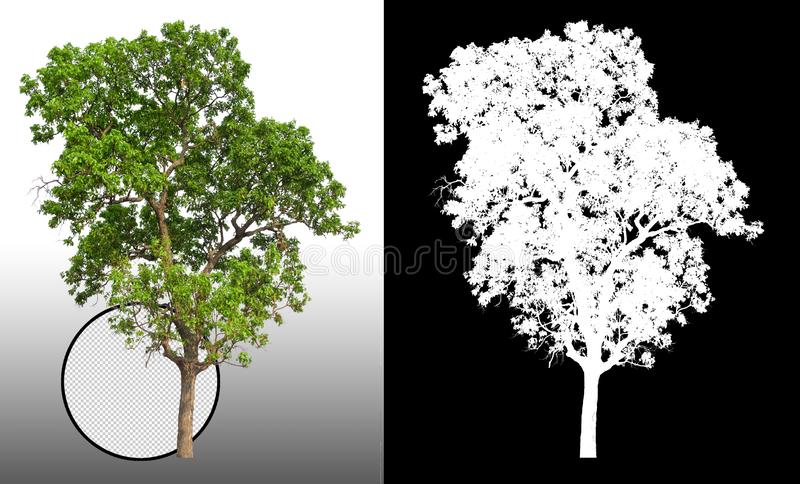 Single tree with clipping path. And alpha channel stock illustration