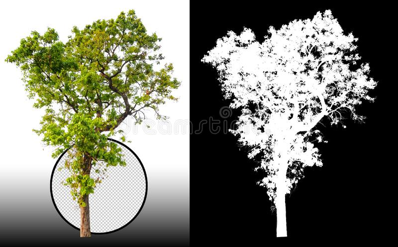 Single tree with clipping path royalty free illustration