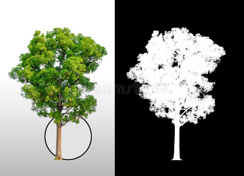 Single tree with clipping path. And alpha channel royalty free illustration