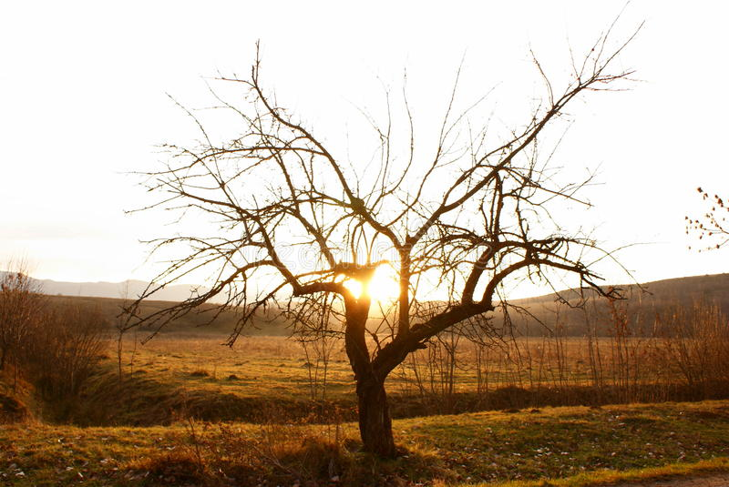 Download Single Tree In Desert In Sunset Time Stock Photo - Image: 12019672