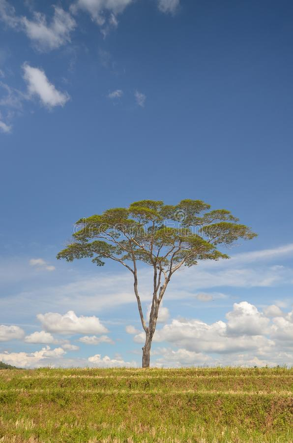 A SINGLE TREE IN A DIKE royalty free stock images