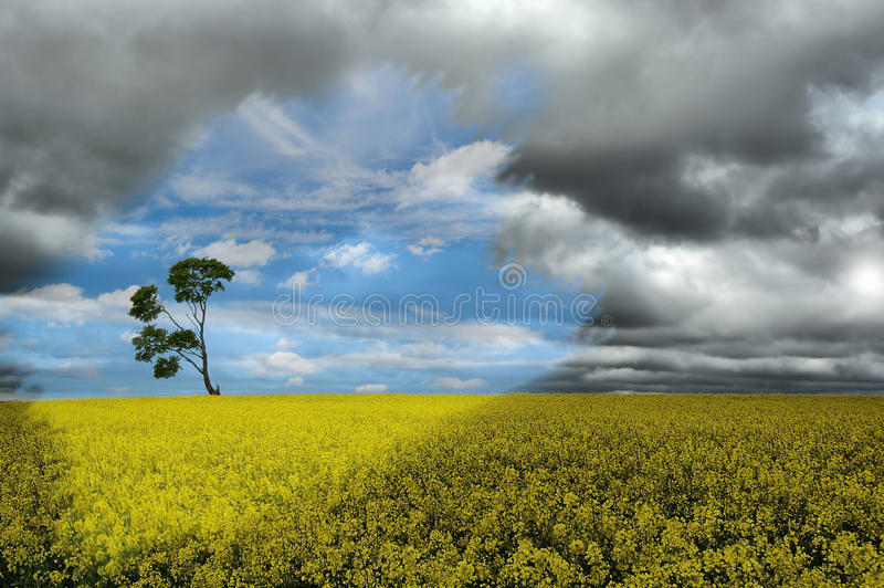Single tree in the field royalty free stock photo