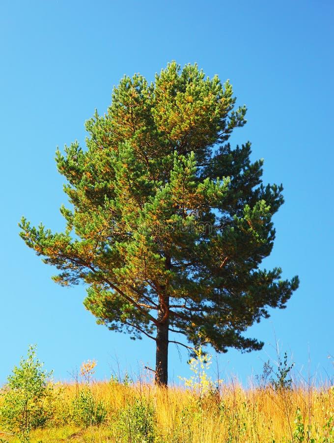 Single tree on the field stock photo