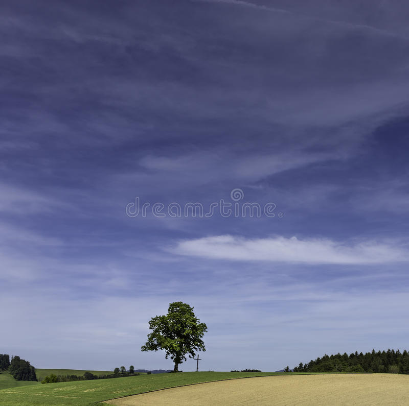 Single tree on field with cross. The silhouette of beautiful single tree next to a cross royalty free stock images