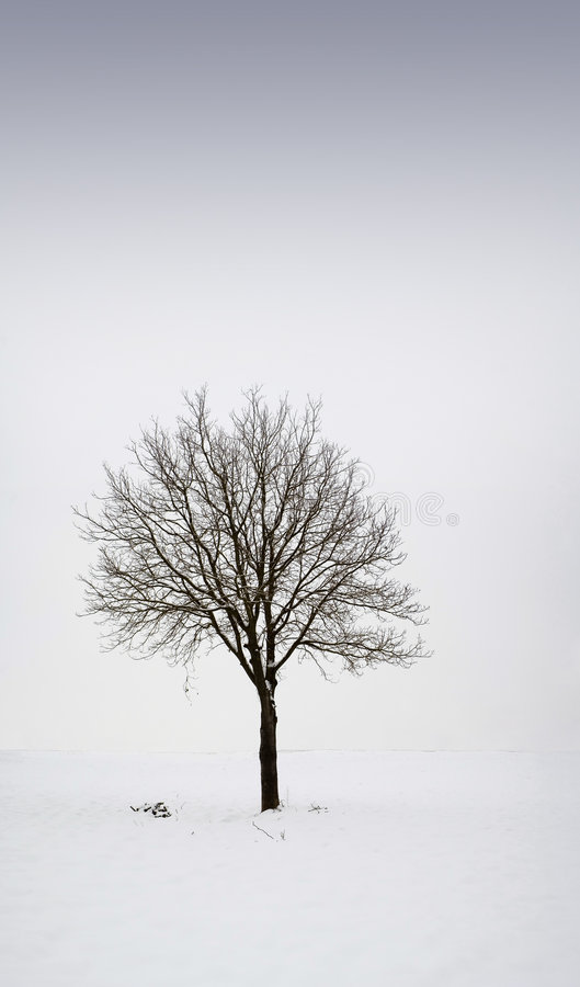 Single tree in field during winter 1 stock image