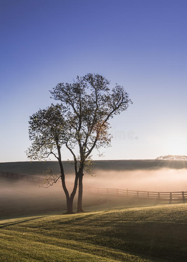 Single Tree in the Fog of Kentucky. As the sun rises over the hills for the day royalty free stock image