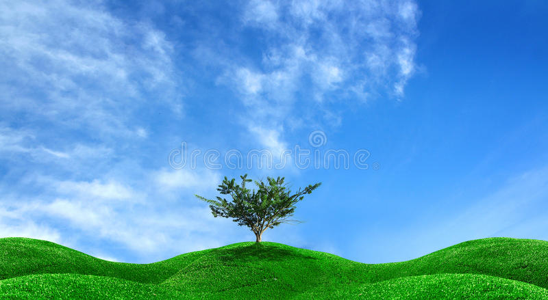 Single tree and green field. The single tree and green field royalty free stock photography