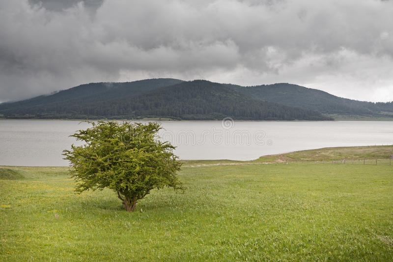 Single tree on a green field. Lake and forest with dark clouds as backdrop stock image