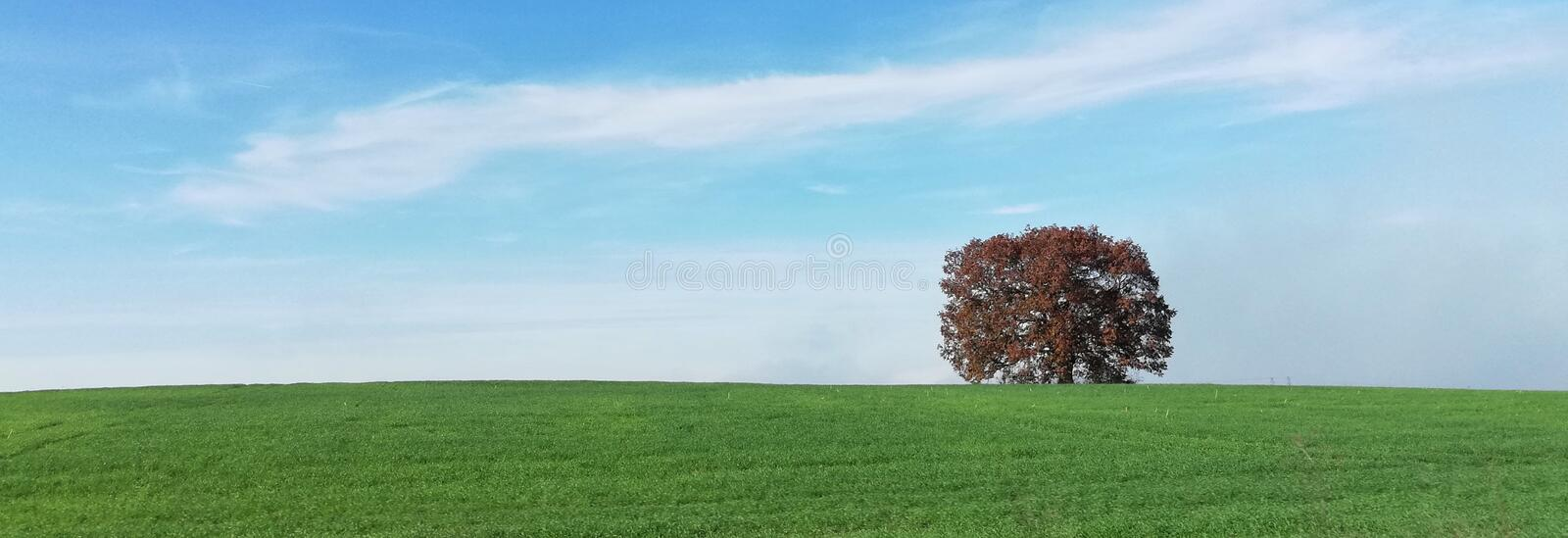 Single tree on Green field. Blue, sky stock images