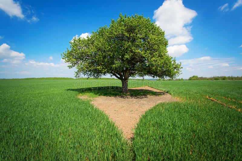 Single tree in a green field with blue sky and white clouds.  stock images