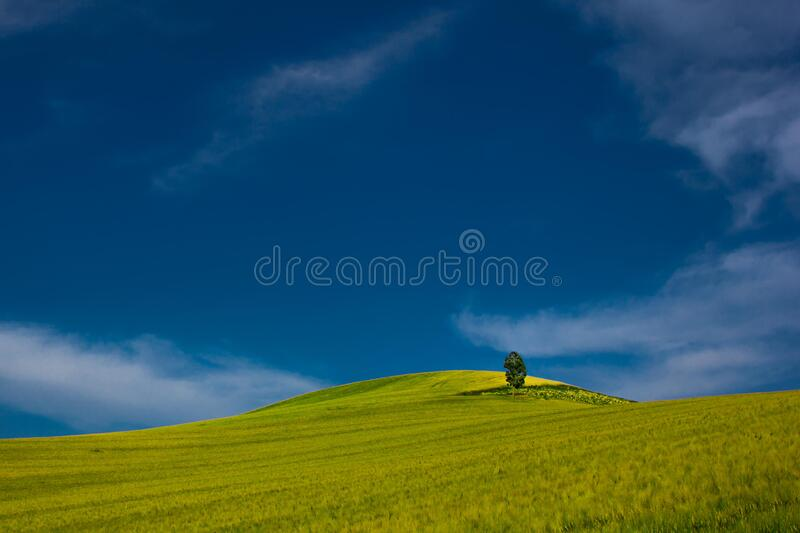 Single Tree In Green Field Free Public Domain Cc0 Image
