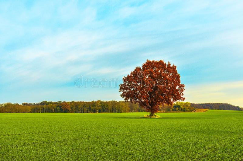 Single tree at green field image. Beautiful background with bright colors. space for text. Single tree at green field under blue sky. Beautiful background with stock photos