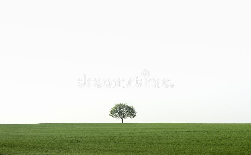 Single tree on a green field. Landscape in the Southwest Germany region, near the town Schwabisch Hall with a single tree on a green field with a strong morning stock photography