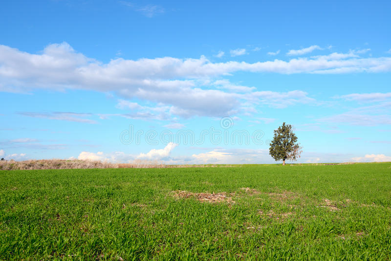 A single tree on a green field. At sunny day stock photo