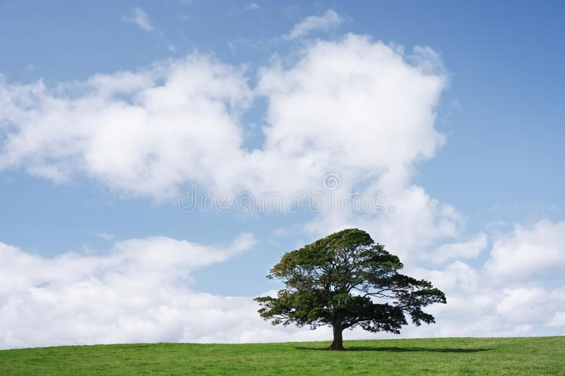 Single tree on green grass against blue sky and clouds stock photo