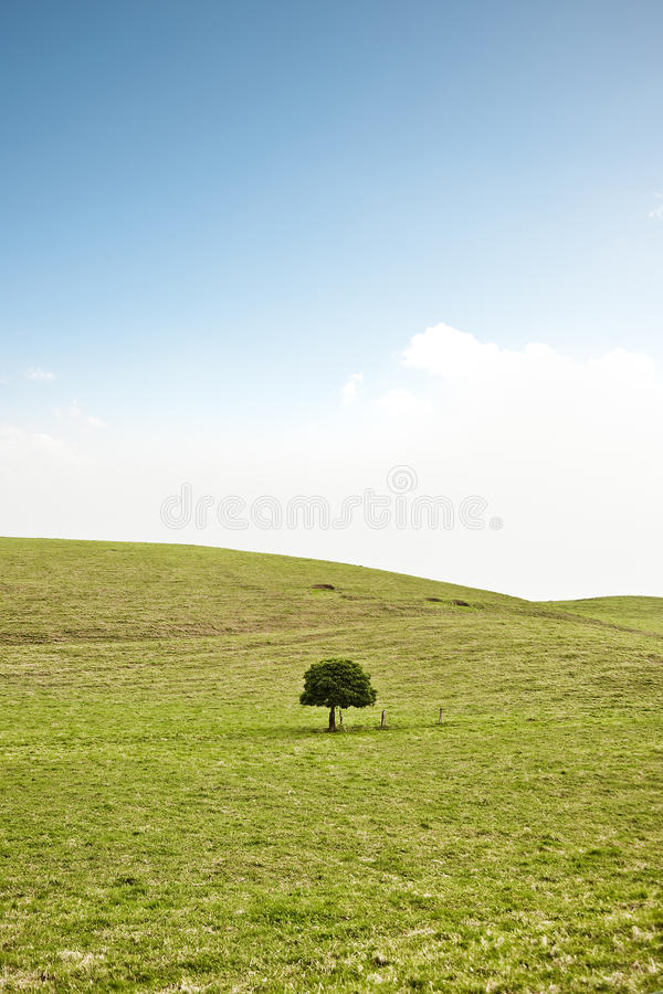 Download Single Tree On Hill Stock Images - Image: 12370184