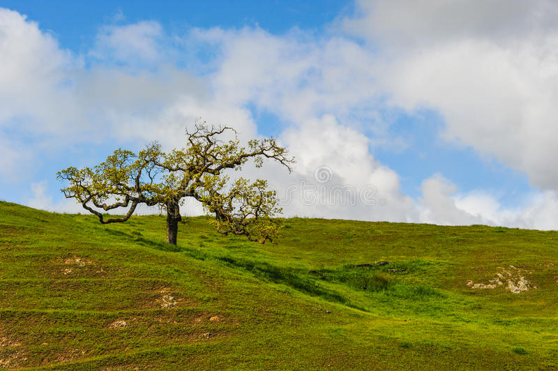 Download Single Tree On A Hill With Short Grass Stock Photo - Image of pathway, sunlight: 39509392