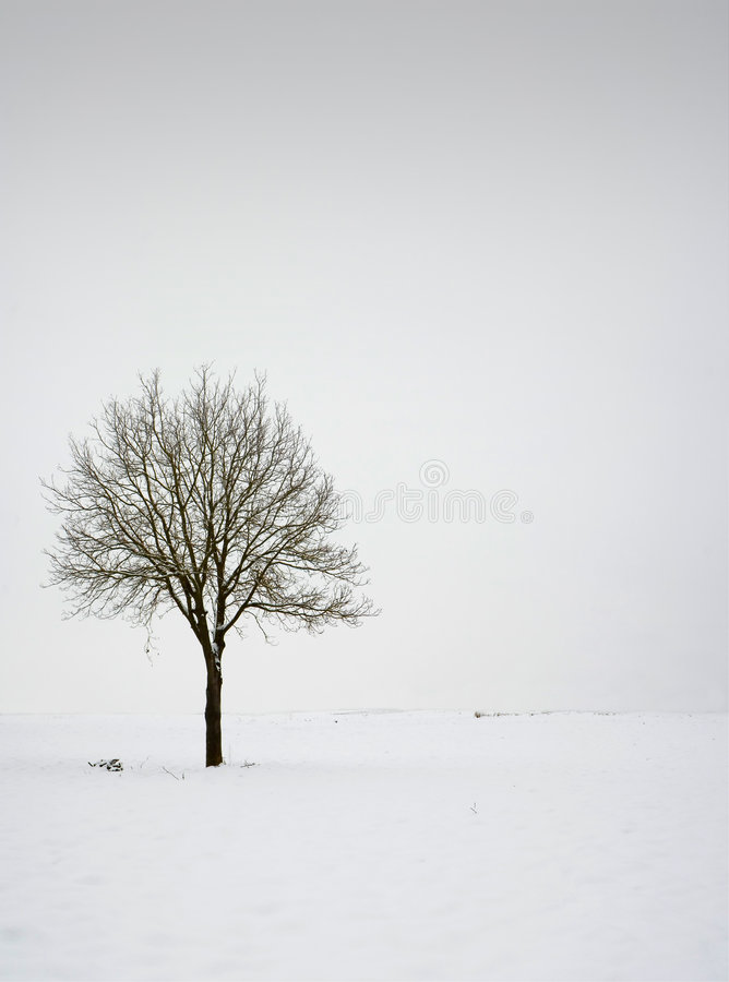 Free Single Tree In Field During Winter Royalty Free Stock Photography - 3972787