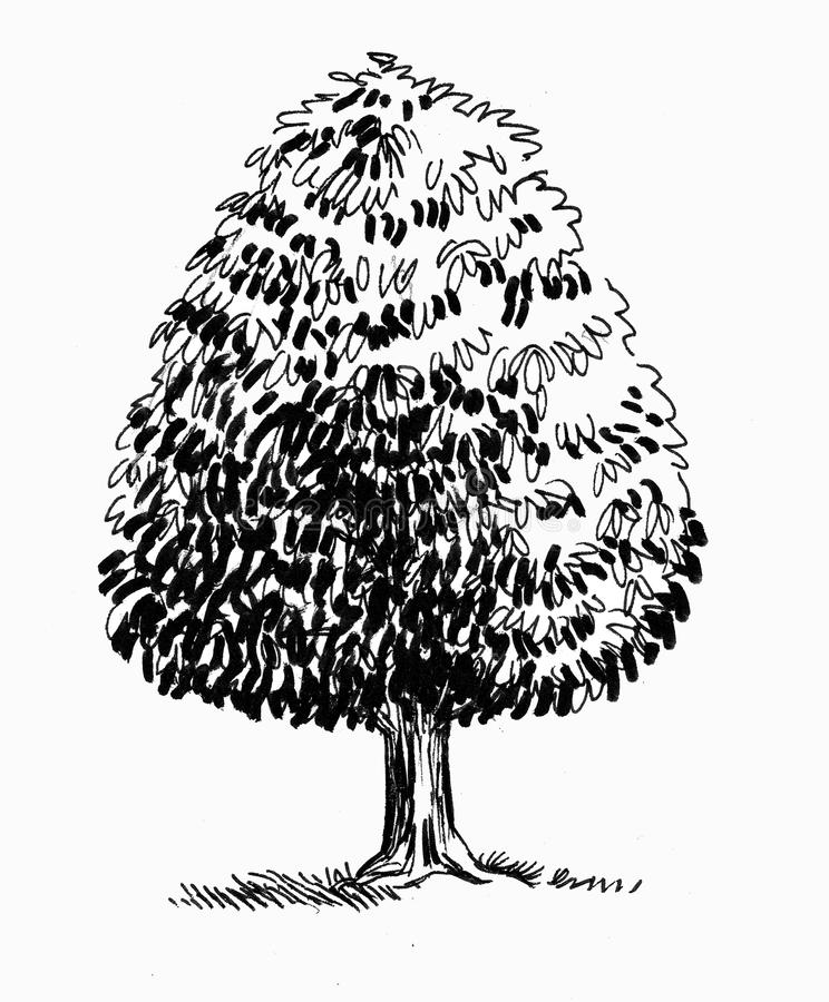 Single tree. Ink black and white drawing of a single tree stock illustration