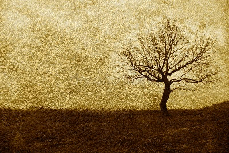 Download Single Tree On Leather Texture Stock Illustration - Image: 10805864