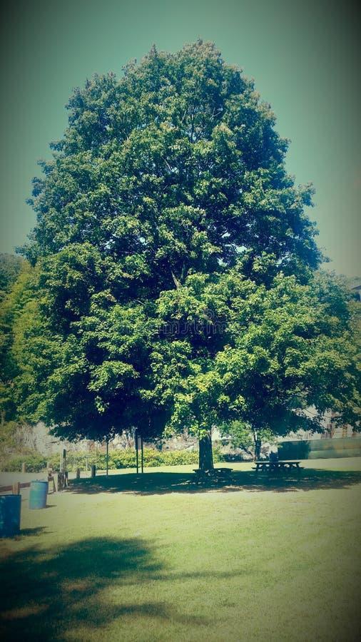 Single tree. royalty free stock photo