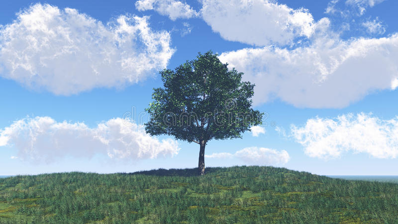 Download Single Tree On The Meadow Stock Photos - Image: 24740133