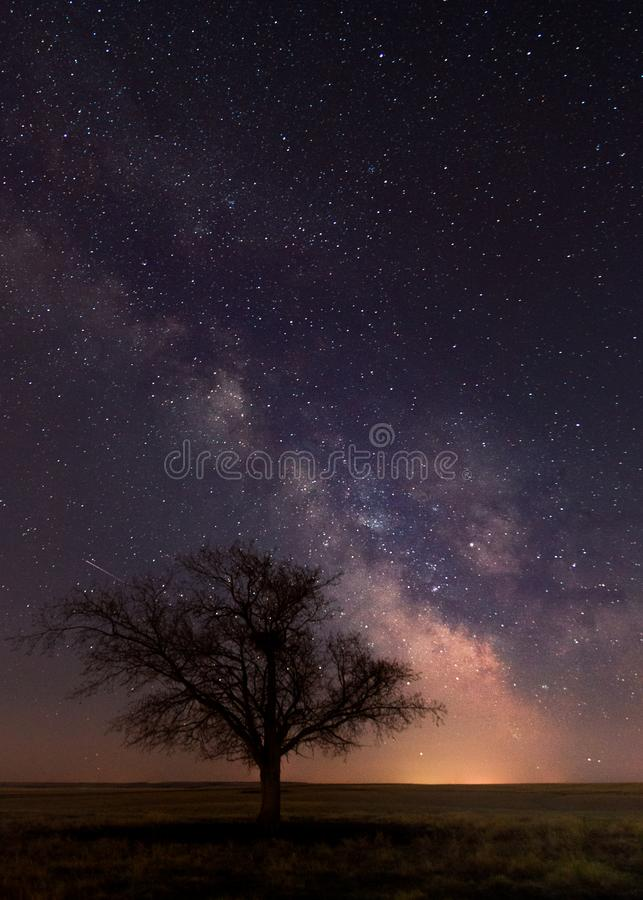 A single tree with a Milky Way stock photography