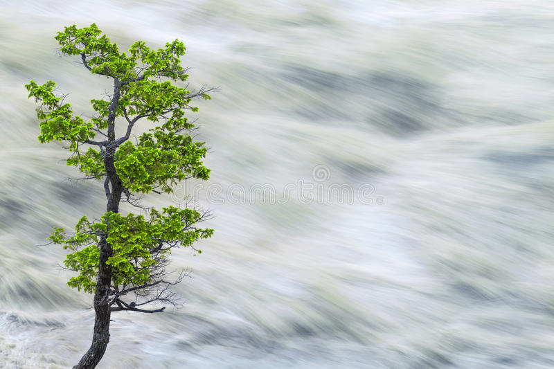 Single Tree By Motion Blurred River Water royalty free stock photography