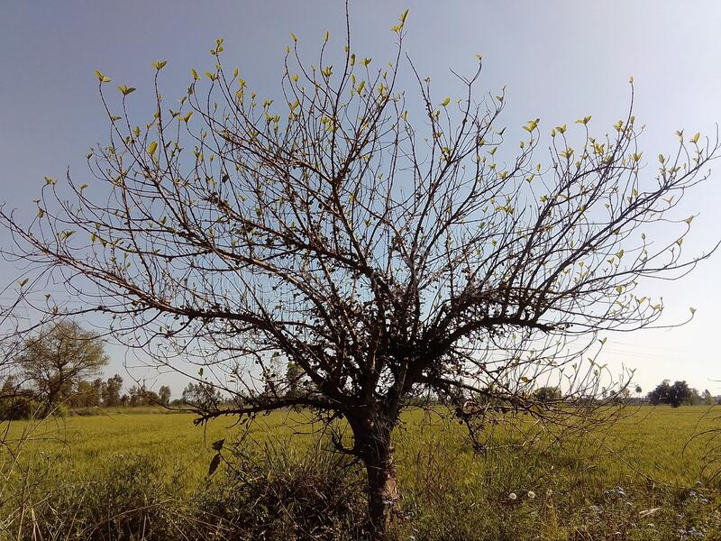 A single tree with new leaves on its branches showing the new beginning of the life. stock photography