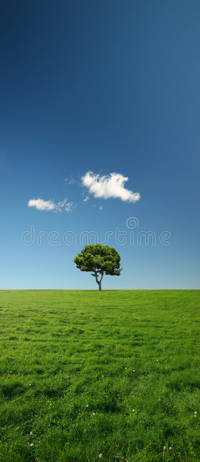Free Single Tree On A Beautiful And Vast Green Meadow Stock Image - 1618661