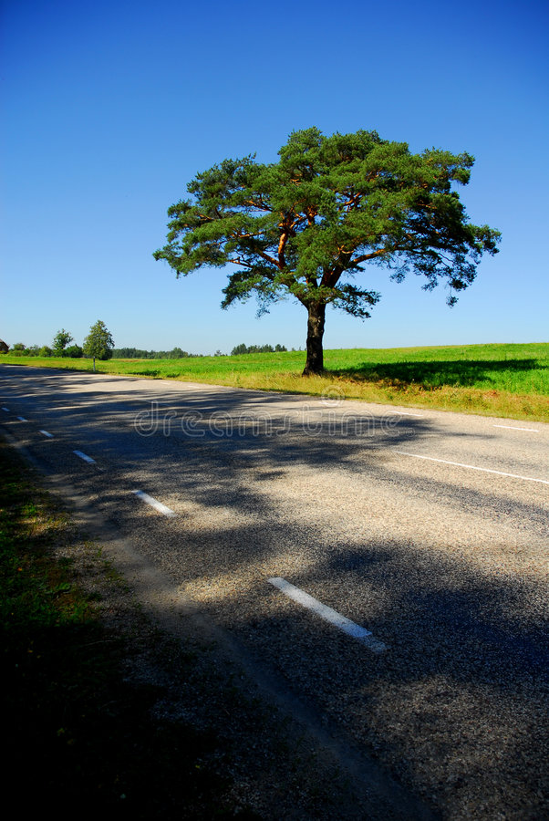 Download Single Tree By The Road stock image. Image of life, countryside - 3261695
