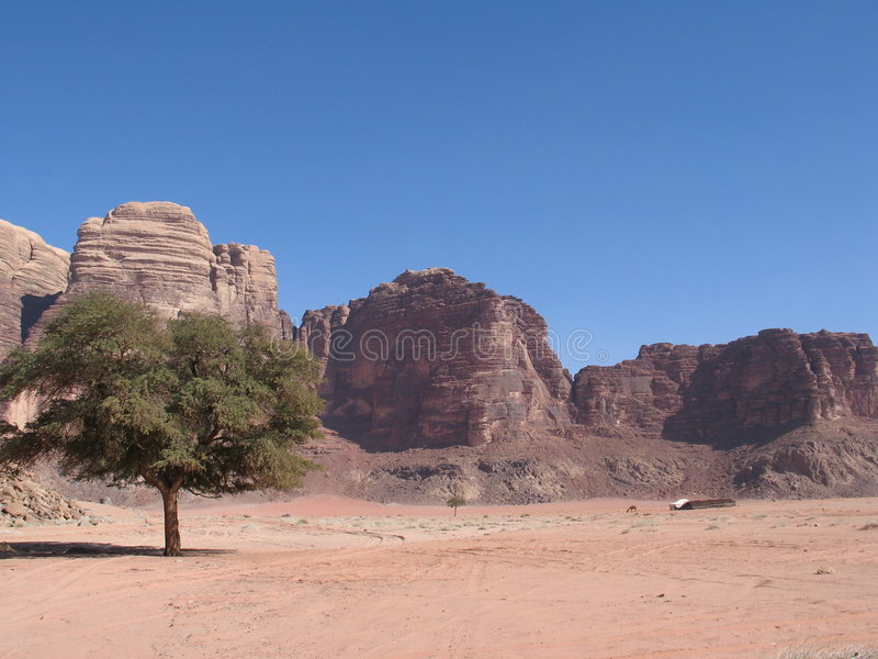 Download Single Tree And Road Wadi Rum Stock Photo - Image: 2057424