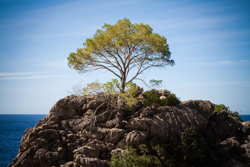 A single tree on a rock in Mallorca. A single tree on a rock in the Mallorca landscape royalty free stock photography