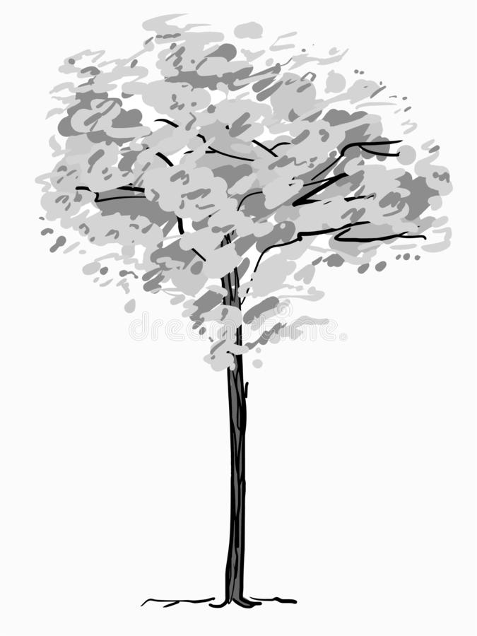 Single tree sketch. Black and white drawing isolated on white background. Simple art. Can be used for card banner stock photo