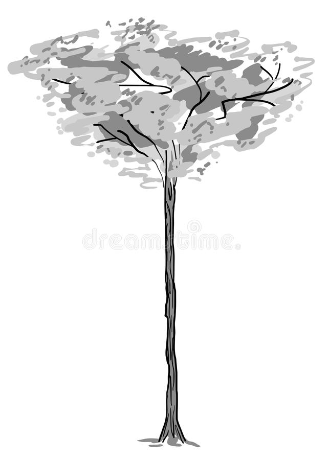 Single tree sketch. Black and white drawing isolated on white background. Simple art. Can be used for card banner stock photos
